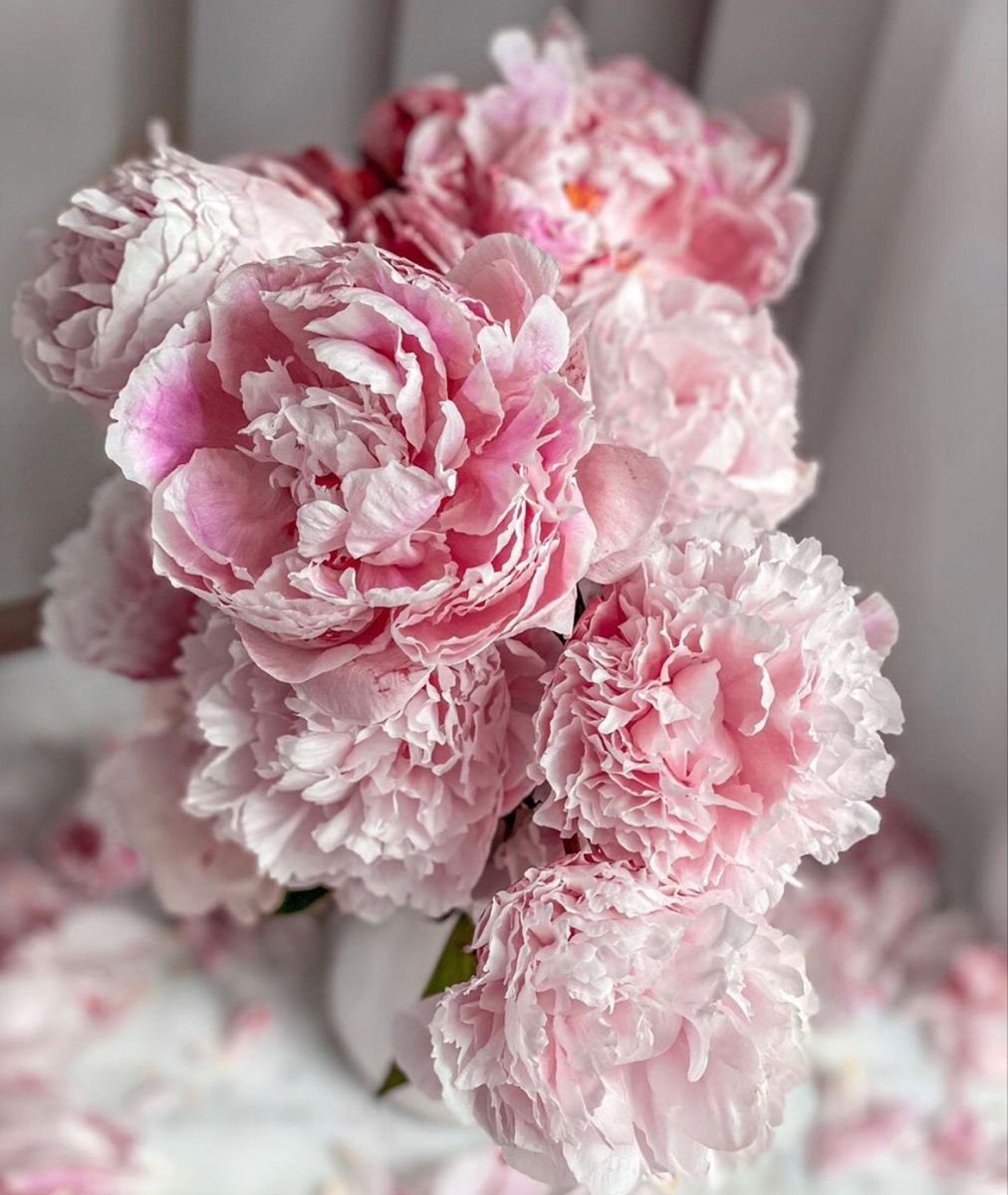 Peonies For Sale In 2020 Wedding Flowers Peonies Peonies For Sale Flowers