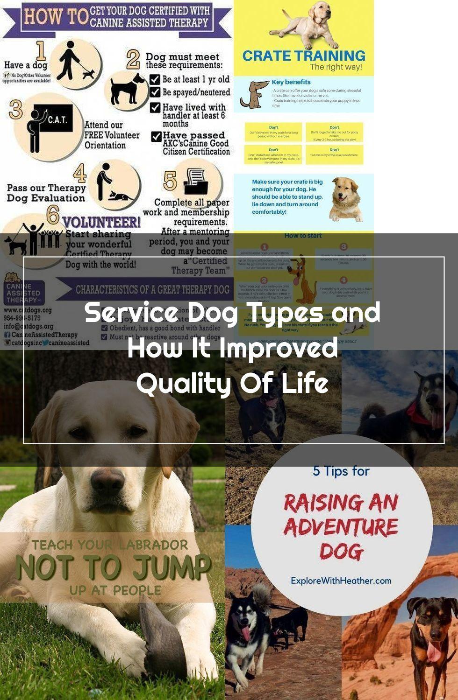 Service Dog Certificate Template 2 Templates Example Templates Example Service Dogs Dog Cards Dogs