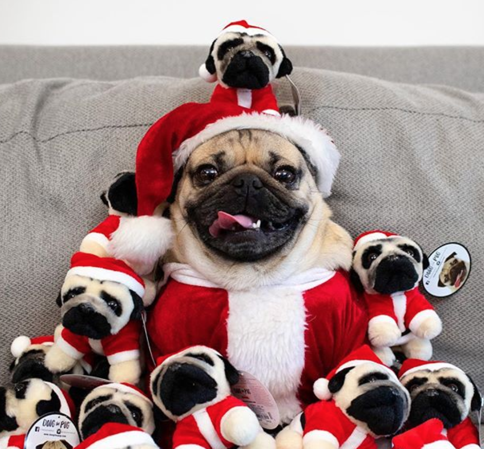 If All You Want To Do This Winter Is Be In A Mood Doug The Pug Is Your Spirit Animal Baby Pugs Cute Animals Cute Pugs