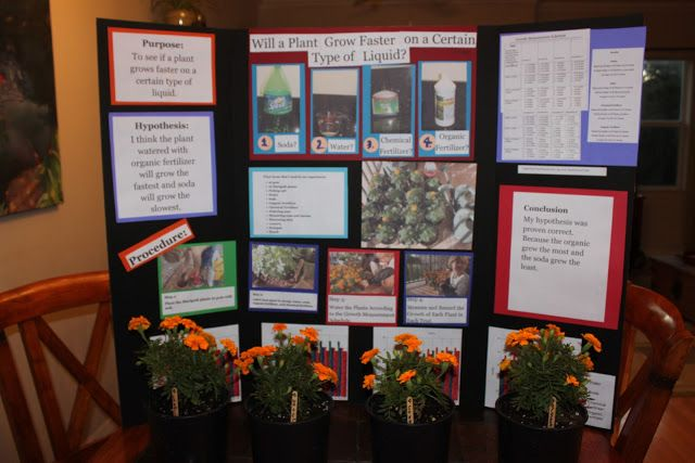 Science Fair Project Will A Plant Grow Faster On A
