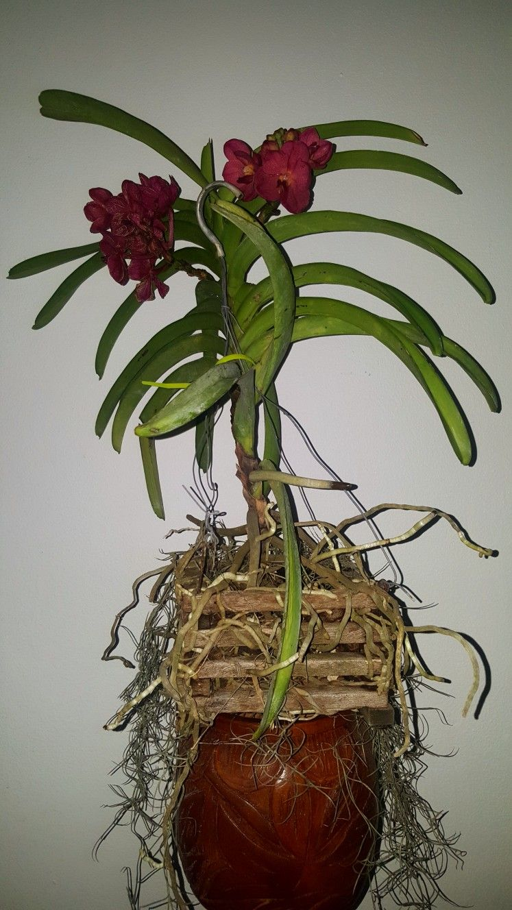 Pin by hector lopez on orchids u flowers u plants u treeus