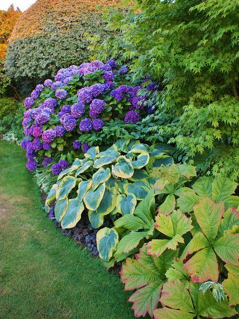 Hydrangea Hosta Rodgersia Landscaping Plants Hostas Plants