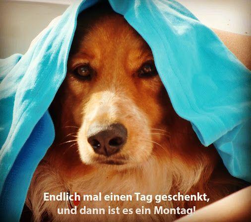 """Der 29. Feber 2016 """"wink""""-Emoticon --- Endlich mal einen Tag geschenkt, und dann ist es ein Montag. www.tierischer-urlaub.com  #Schaltjahr #Montag #Urlaubmithund #Hank Danke an Mario für das tolle Bild von Hund Hank! Und an Gert für die literarische Inspiration...;-) (c) Bild: Mario Stracke Urlaub mit Hund, Katze & Co - www.tierischer-Urlaub.com – Google+"""