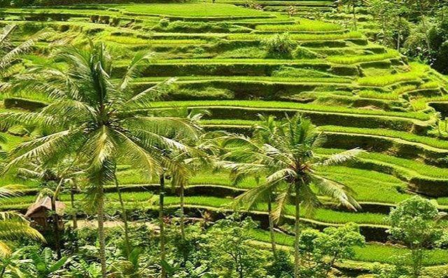 Wisata Di Ubud Bali Yang Paling Diminati Wisatawan Mancanegara Wisata Asia Pemandangan Wisata Budaya