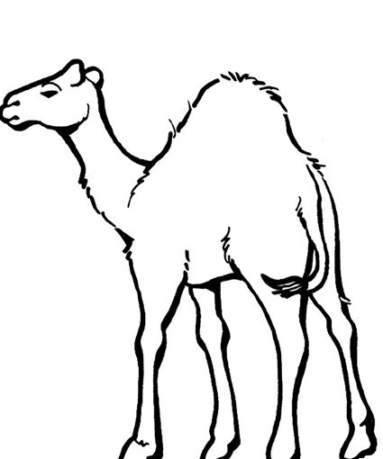 free coloring page camel for kids