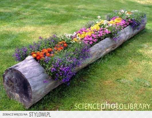 Znalezione Obrazy Dla Zapytania Pomysl Na Kwiaty W Ogrodzie Plants Log Planter Garden Inspiration