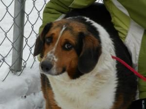 Adopt Lilly On Beagle Dog Dogs Beagle