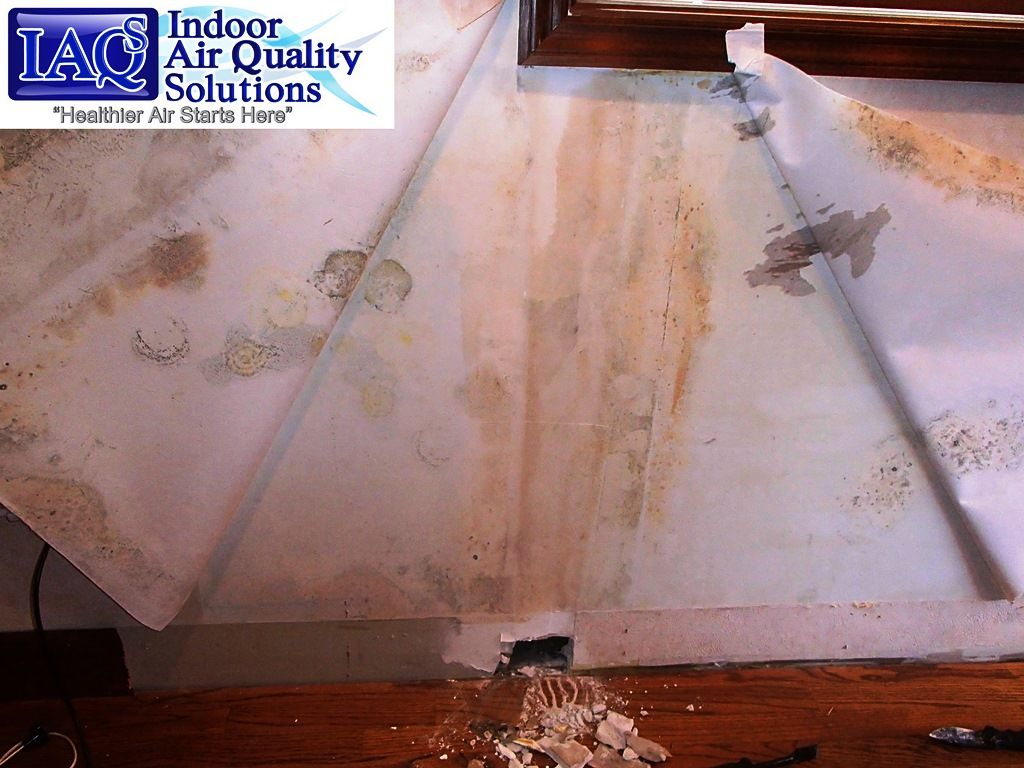 IAQS Indoor Air Quality Solutions Orlando Mold Inspection