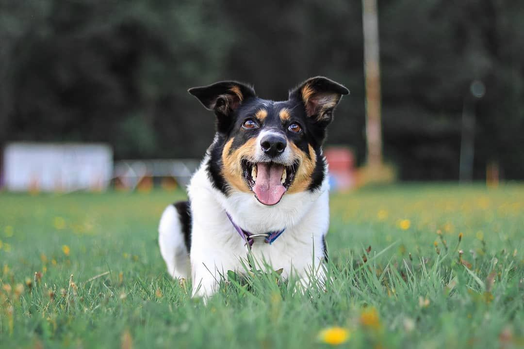Wonderful Images Border Collies Puppy Thoughts The Edge Collie