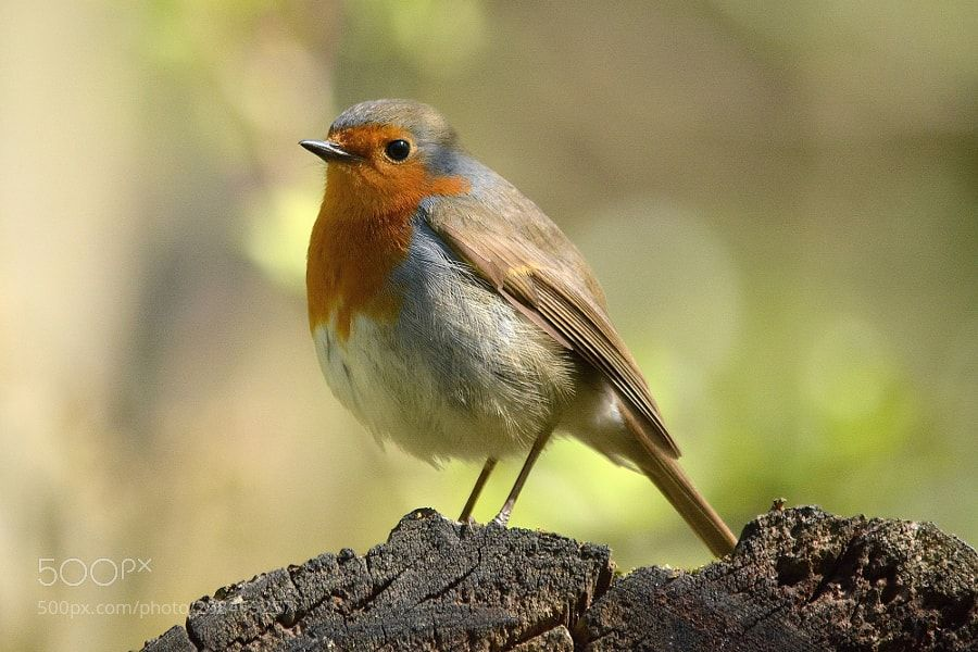 robin... by chezclem via http://ift.tt/2pWGTZ6