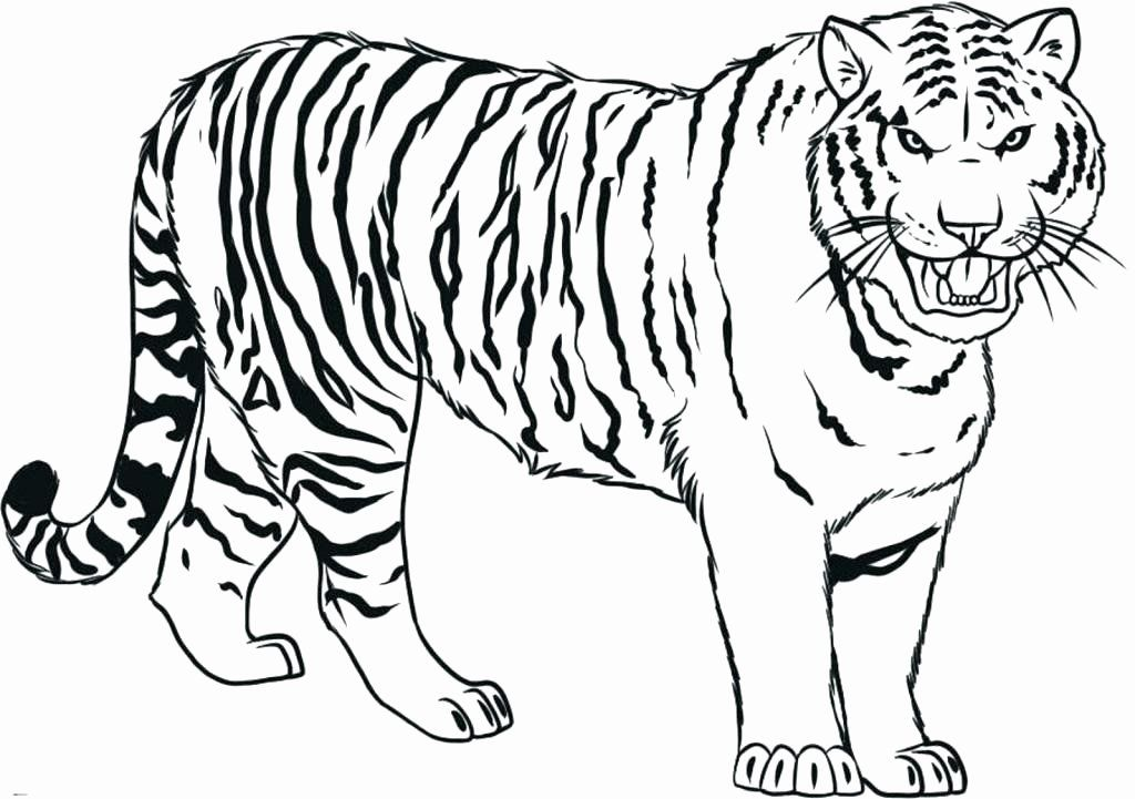Saber Tooth Tiger Coloring Page Best Of Saber Tooth Tiger Coloring Page At Getcolorings In 2020 Coloring Pages Shark Coloring Pages Coloring Pages To Print