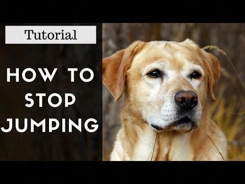 Stop dog jumping and dog training tips sleep CHECK THE