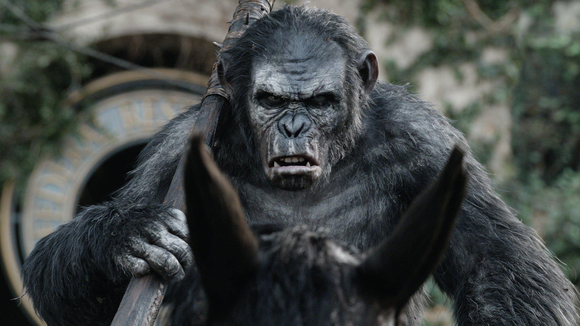 Epaonnistuneesta Laaketieteellisesta Kokeilusta Levinnyt Apinavirus On Surmannut Kymmenessa Vuodessa Satoja Miljooni Planet Of The Apes Dawn Of The Planet Apes