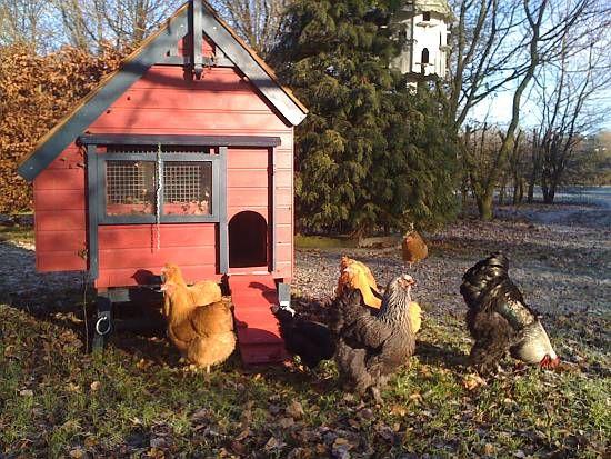 Delightful Chicken Houses