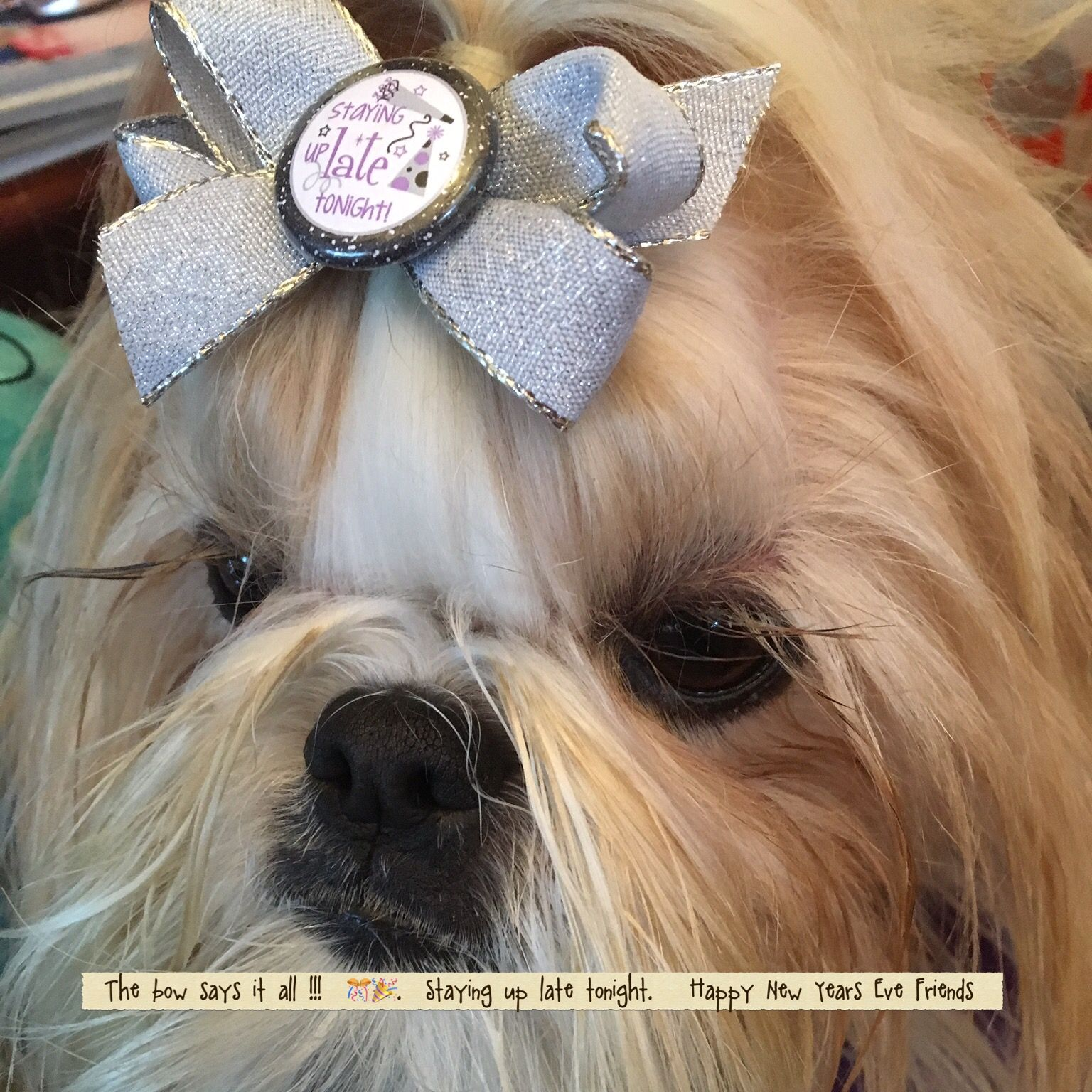 A Year of Rescue Resolutions For You | Crossroads Shih Tzu ...  |Shitzu Puppies New Years Eve