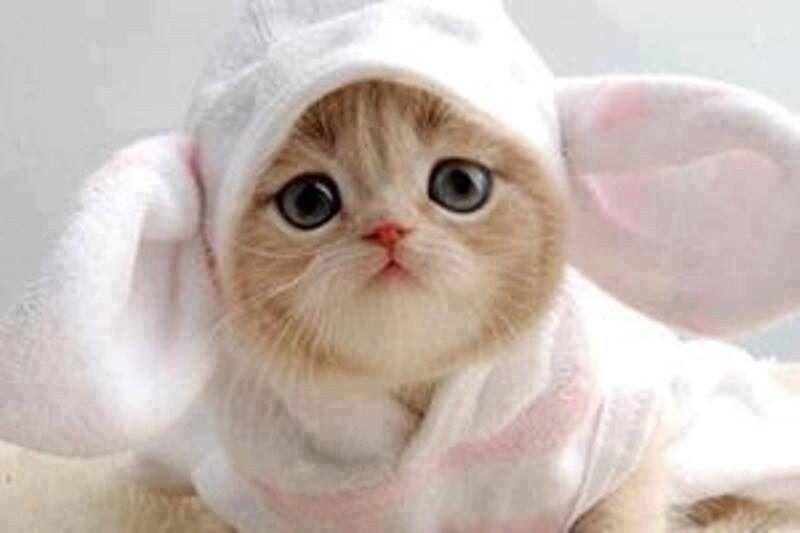 #Cat #cats #bunny #cute #kitten #pet #pets