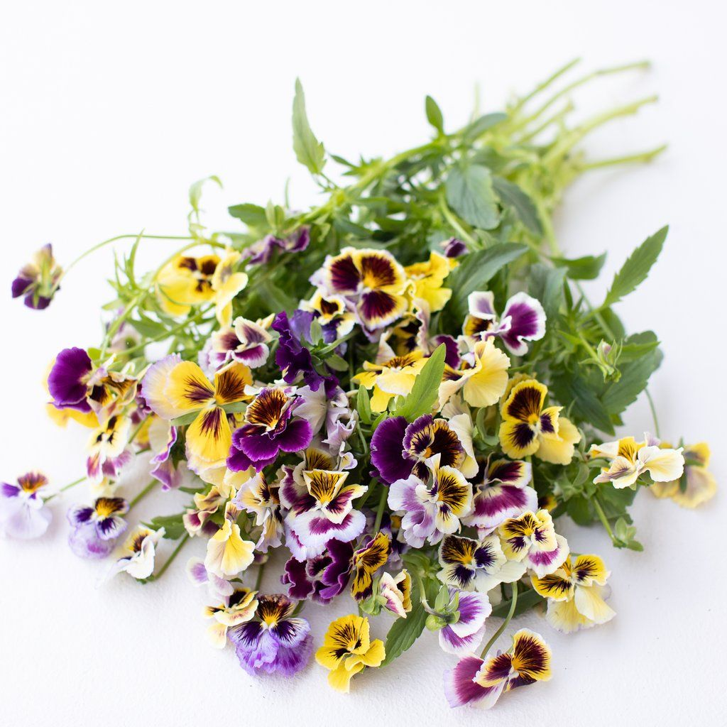 Pansy Rococo Frill Mix In 2020 Flower Farm Pansies Pansies Flowers