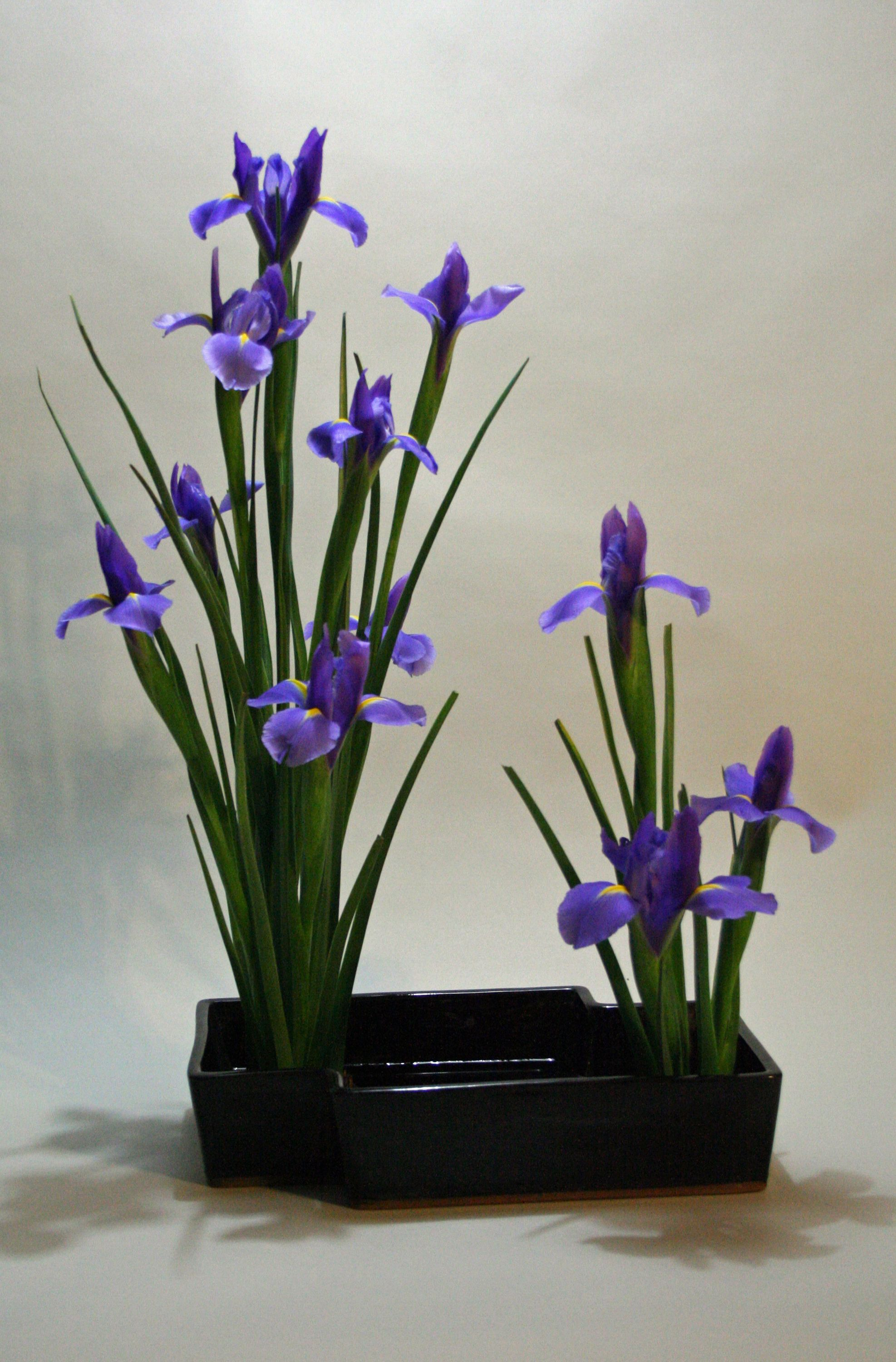 Using Only One Flower Iris Ikebana All Things Floral