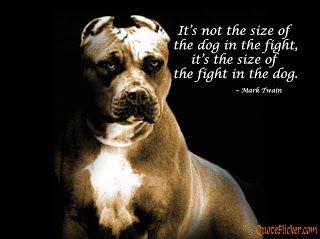 Size Isn T An Excuse Pitbulls Pitbull Dog Puppy Pitbull Dog