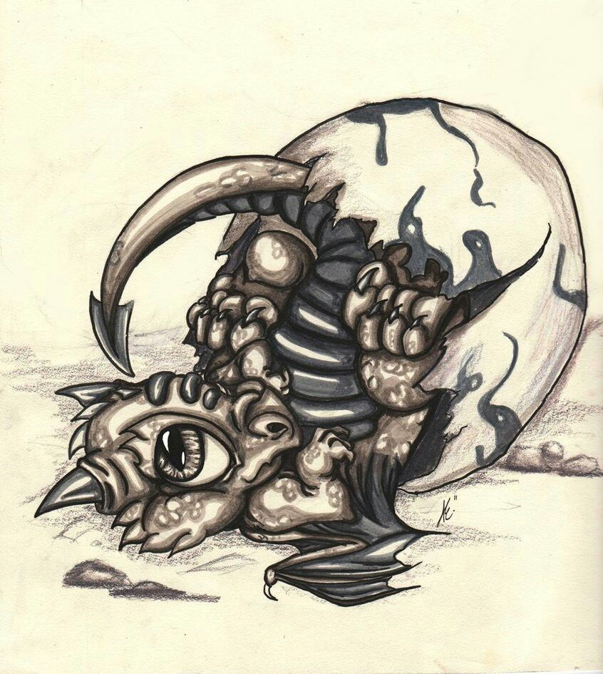 baby dragon   drachenzeichnungen, drachen skizze