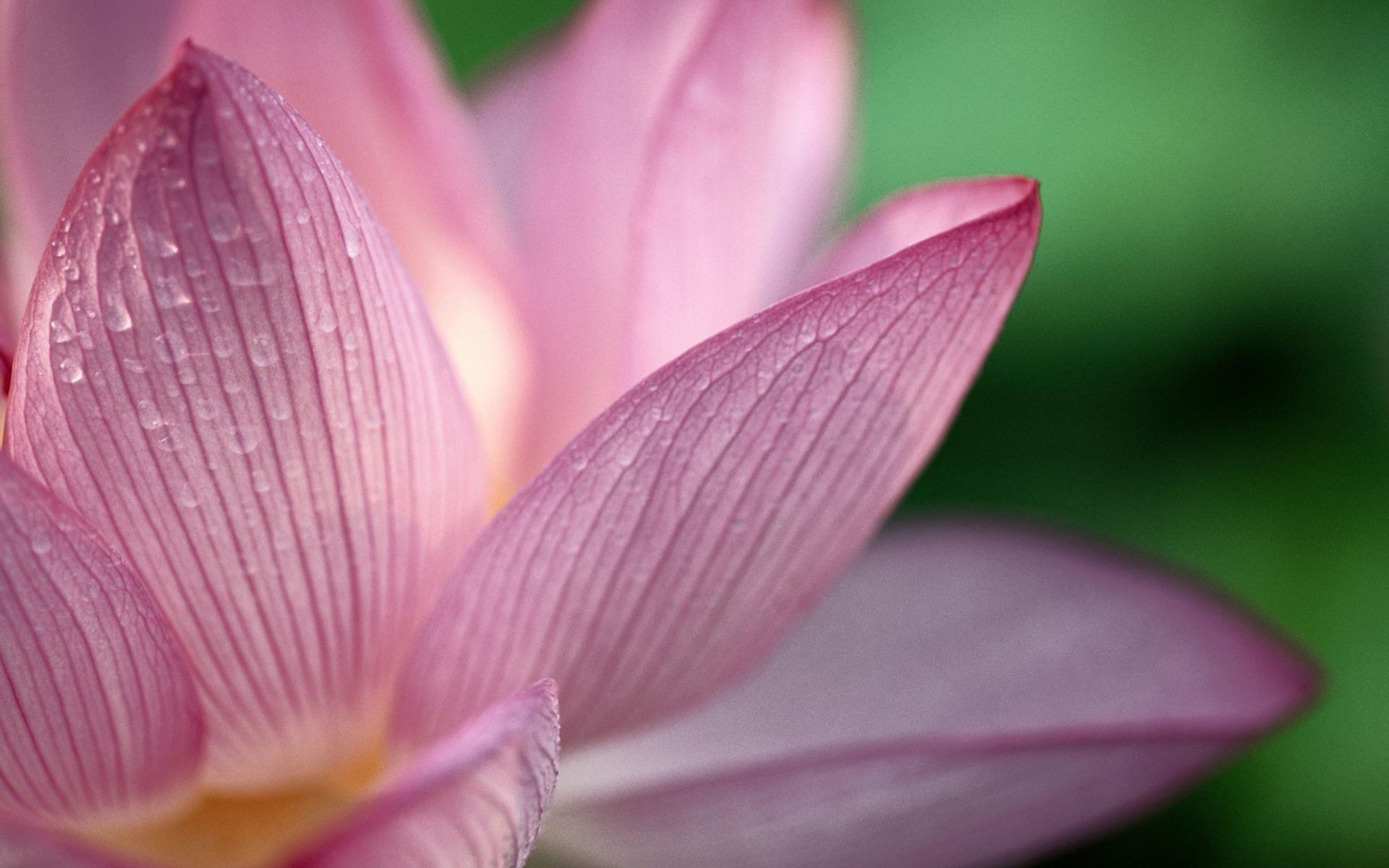 Light Pink Flower Background Light Pink Flower Wallpaper Hd