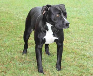 Pin on Animals Needing Furever Homes