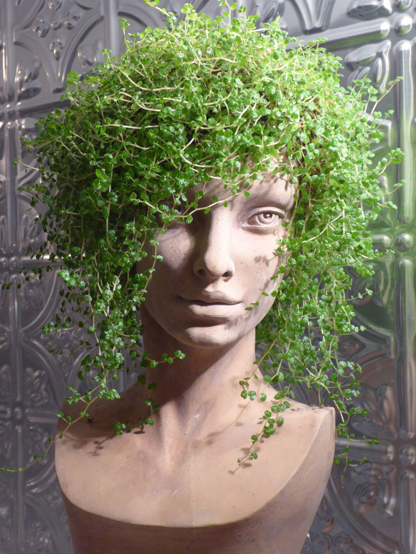 Planter Head Soleirolia Soleirolii Diy Garden Projects 400 x 300