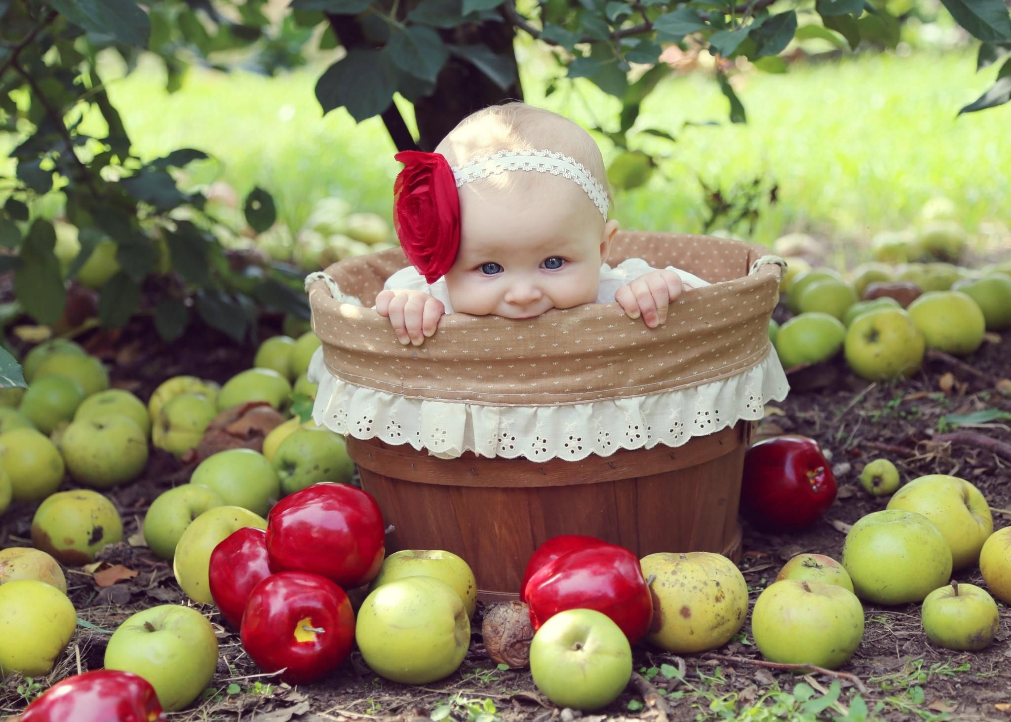Fall photography baby girl apple orchard Photography