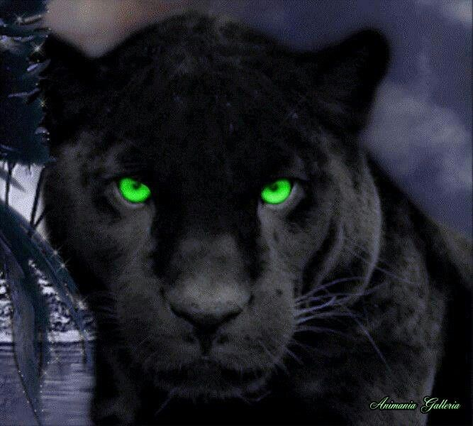 Green Eyed Panther Cat Aesthetic Panther Black Panther