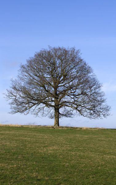 een boom in de winter, wie zegt dat bomen zonder bladeren saai zijn? Dit is toch prachtig?