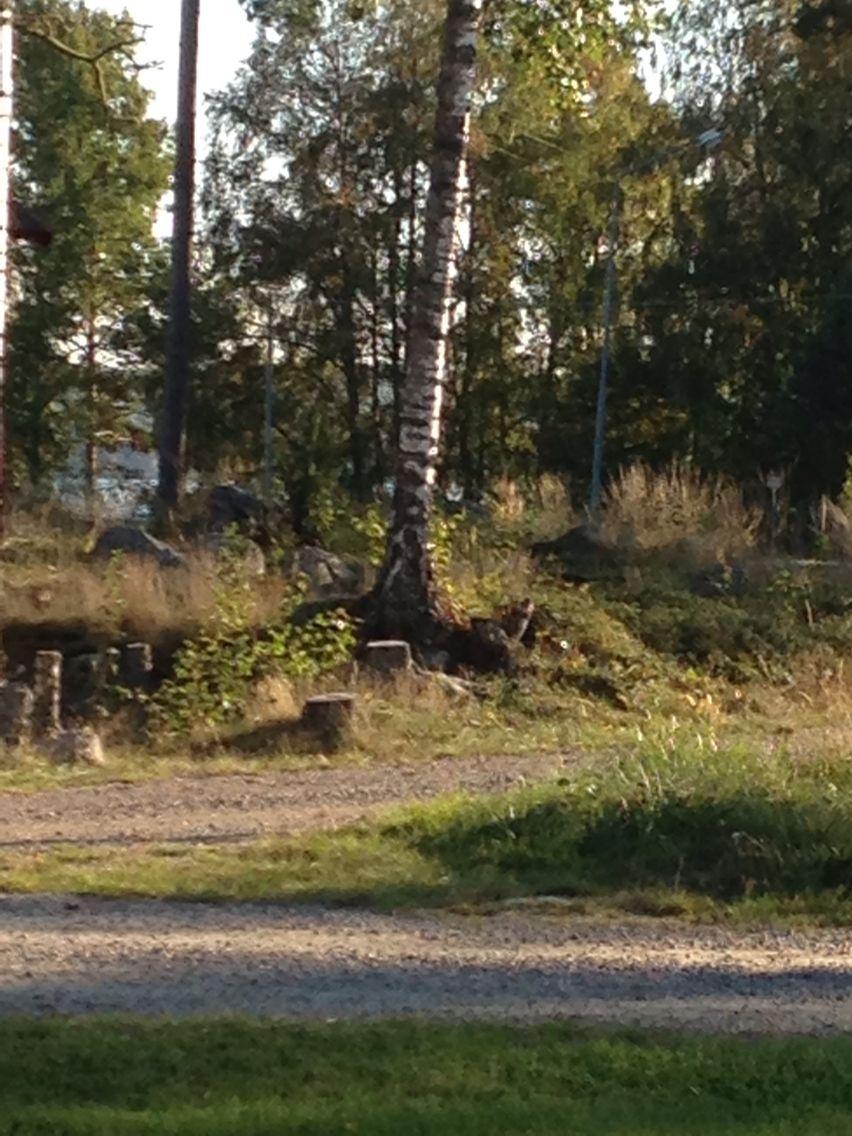 Autumn in Svärdsjö, Dalarna, Sweden