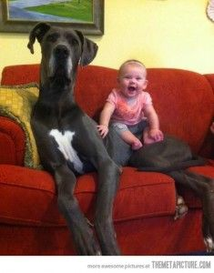 Pictures Of Extra Large Dogs And Kids