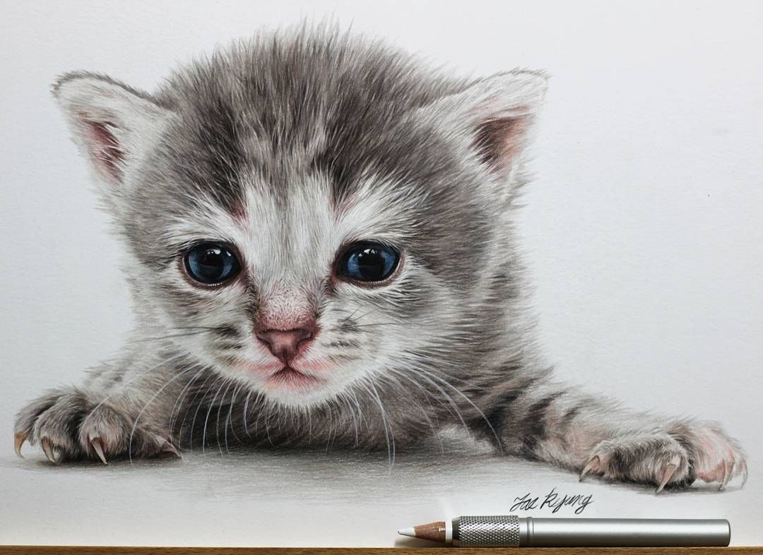 Cute Kittens And Puppies Drawings Cute Cat Illustration Puppy Drawing Kittens And Puppies