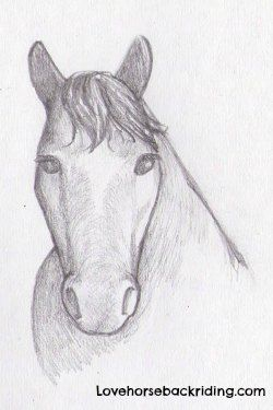 Horses drawings in pencil step by step - photo#31