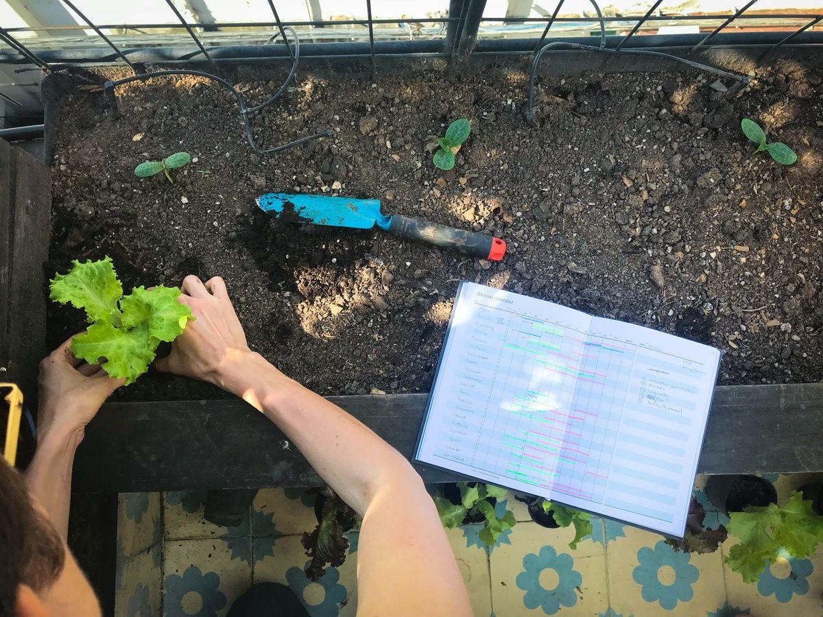 Gurken Im Topf Anbauen Pflanzen Pflegen Und Die Richtigen Sorten Pflanzen Gurken Anbauen Pflanzideen