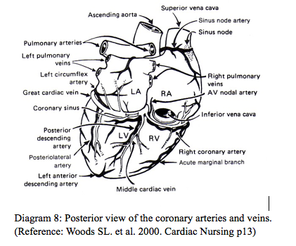 Posterior view of heart, coronary arteries and veins ...