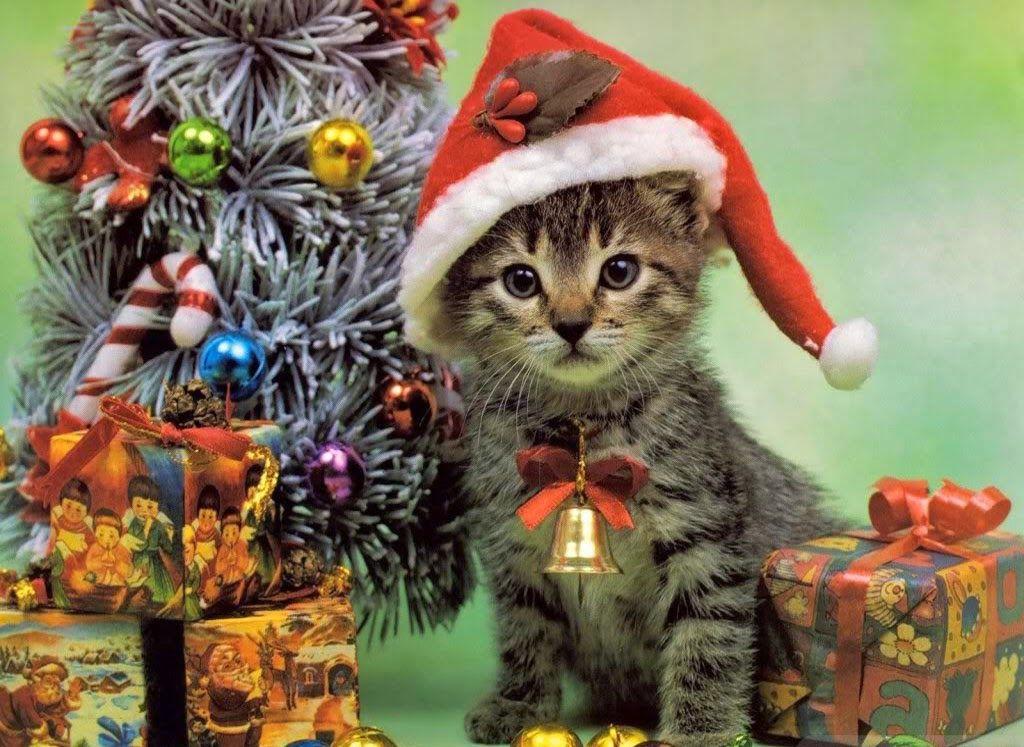 pin von sabine auf weihnachten weihnachten tiere katze. Black Bedroom Furniture Sets. Home Design Ideas