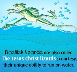Mystically Amazing Facts About Lizards | Articles, Lizards and Facts