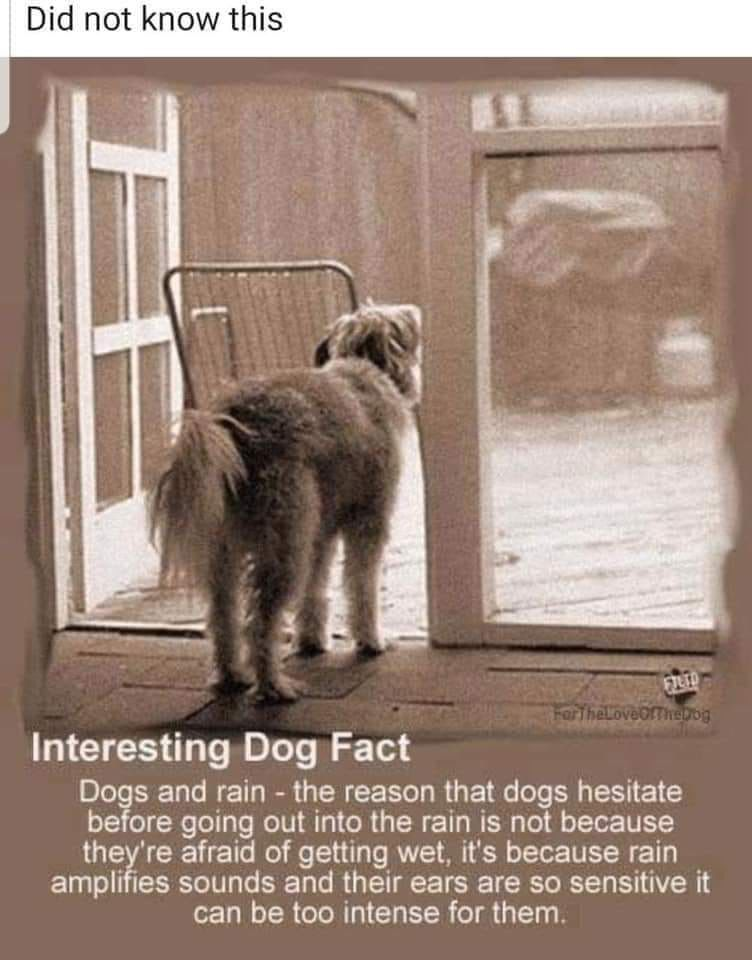 Pin By Wanda Edwards On Dogs Dog Facts Pets Dogs