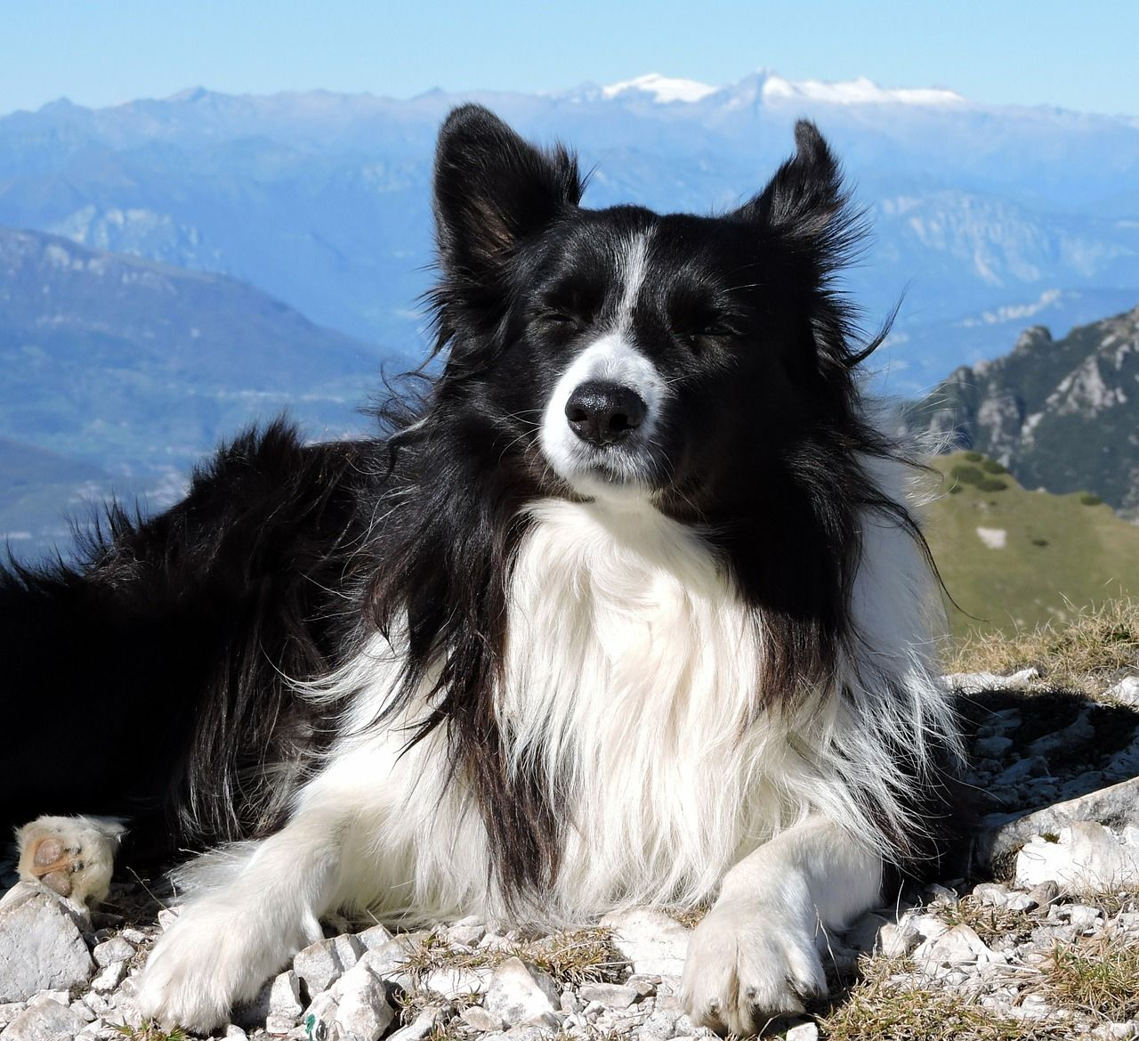 Border Koli Pas Sve O Border Koli Pasmini Pasa Collie Dog