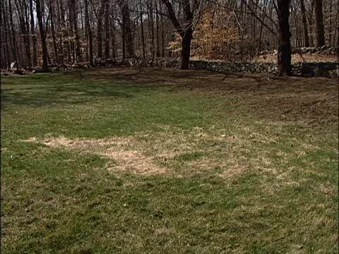 How to Over-seed Bare Spots in a Lawn • Ron Hazelton ...