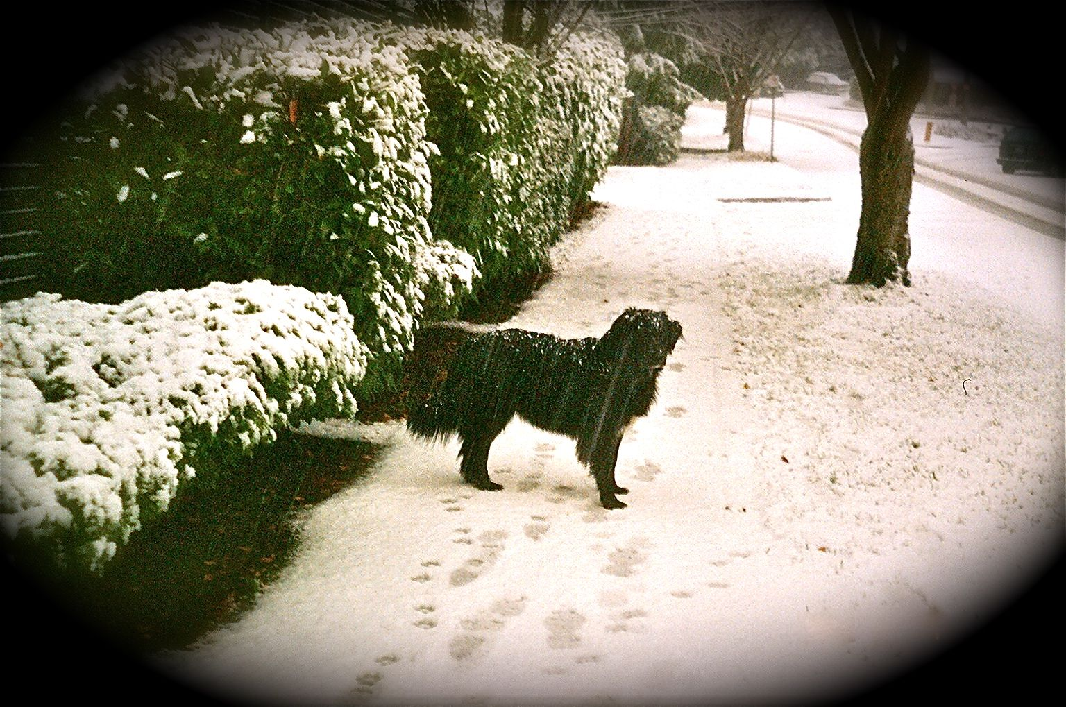Indy in the snow!
