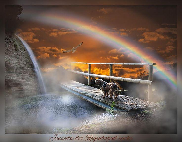 Jenseits Der Regenbogenbrucke Wenn Mein Hund Gestorben Ist Hund Starb Regenbogenbrucke Regenbogenbrucken Hund