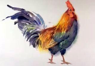 Dessin et peinture vid o 2042 le coq l 39 aquarelle lapalettedecouleurs apprendre - Coq a dessiner ...