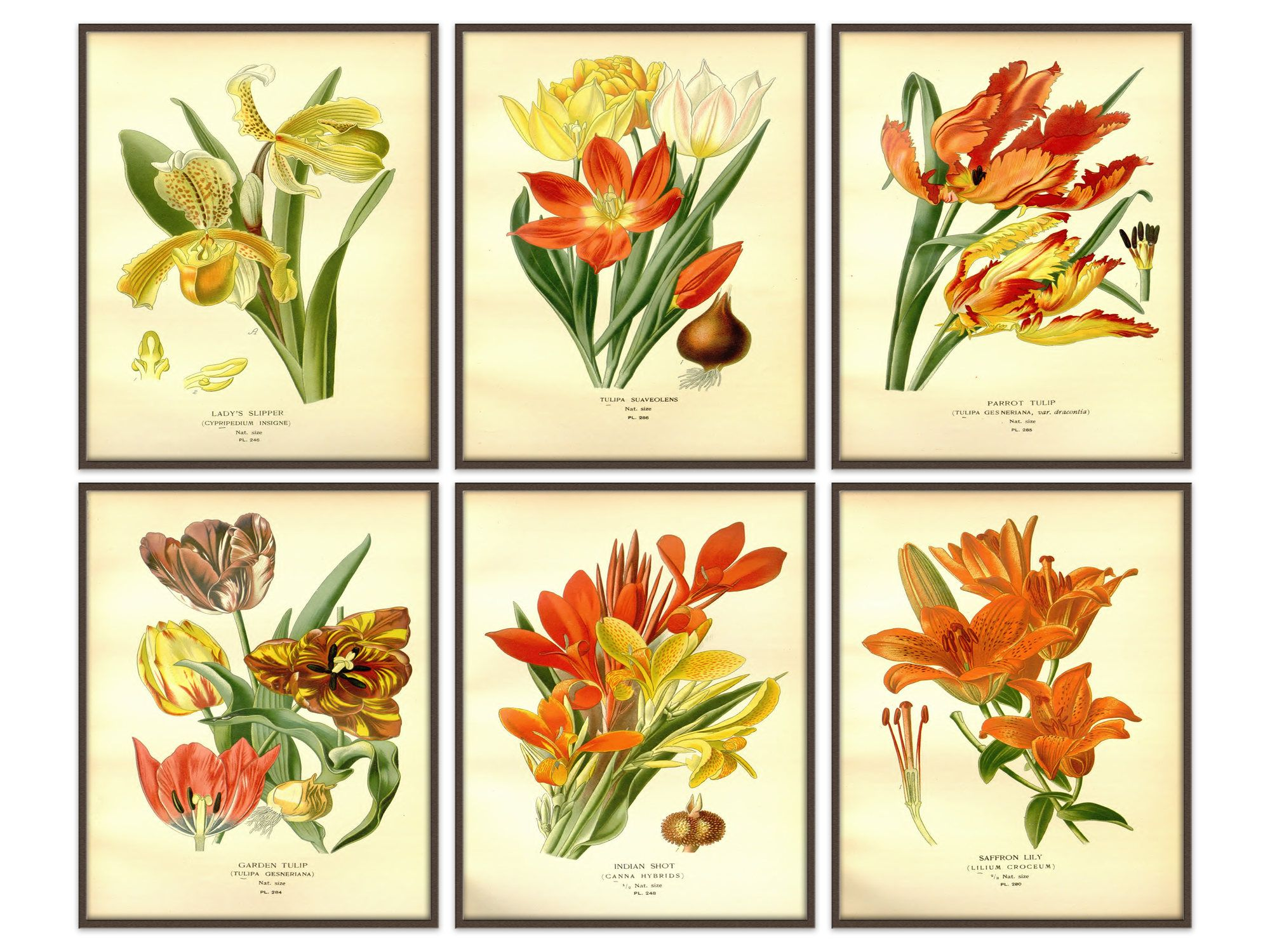 Botanical Prints, Botanical Illustration, Botanical print vintage ...