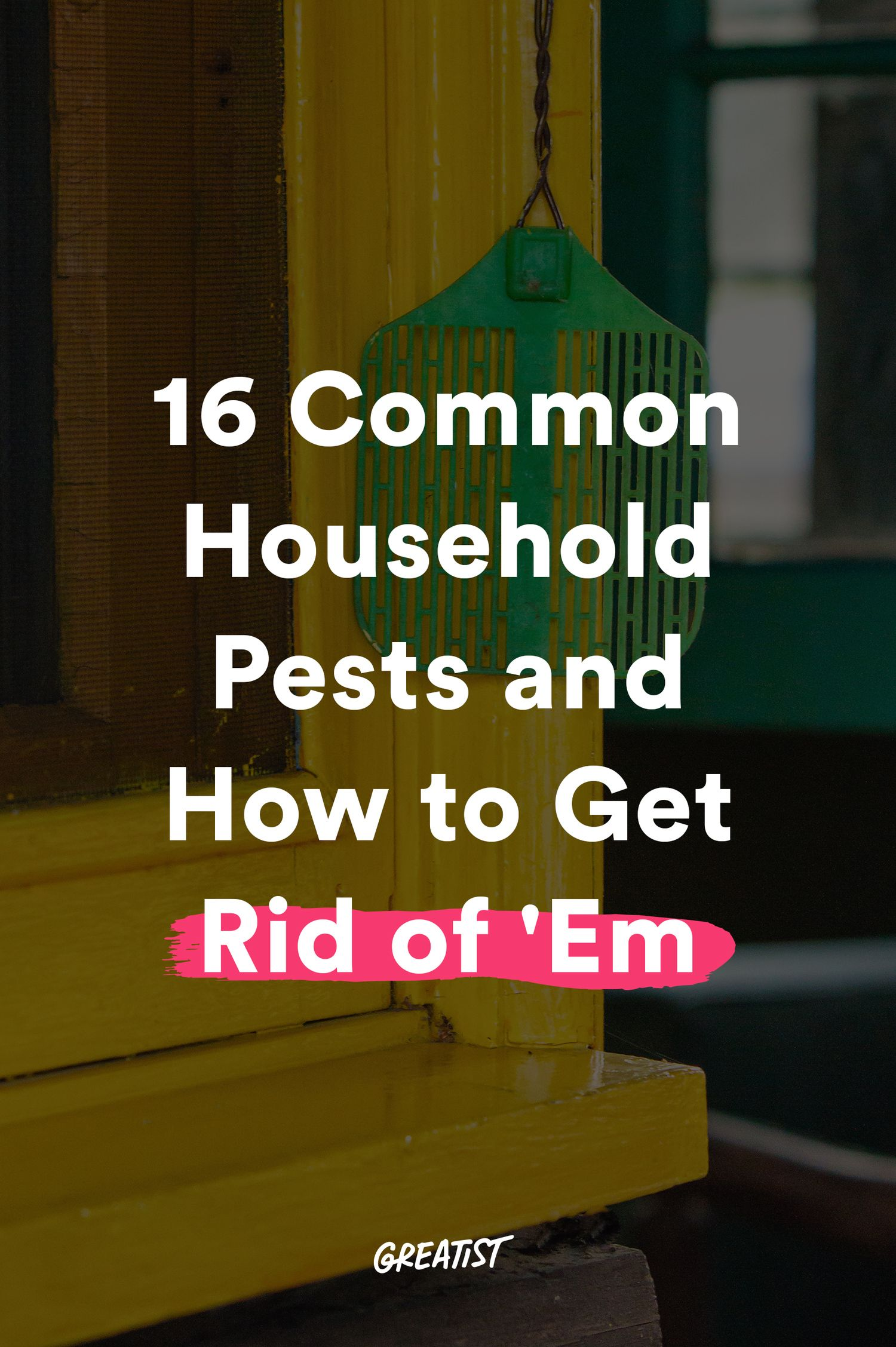16 Common Household Pests and How to Get Rid of 'Em
