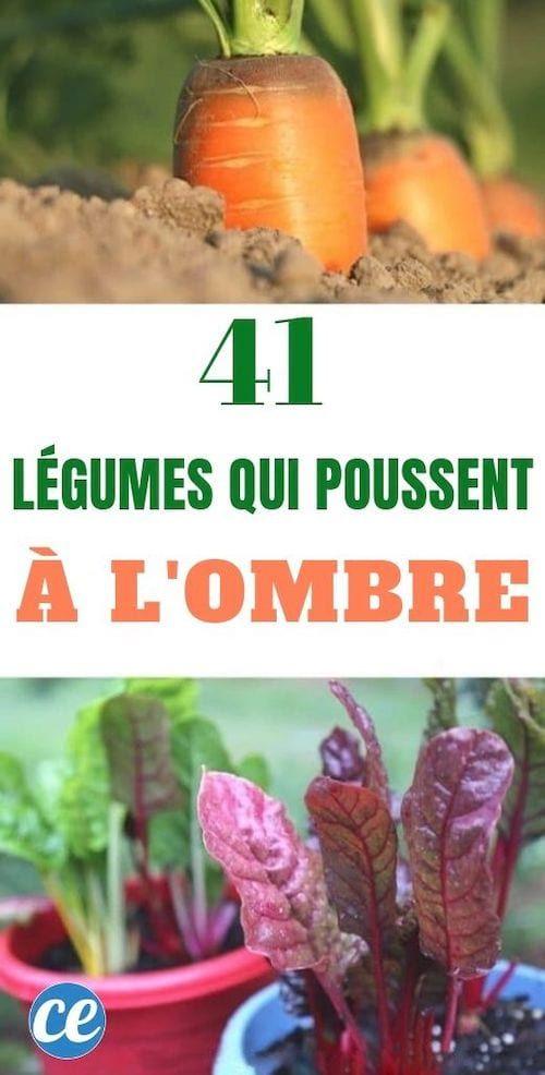 41 Fruits Et Légumes Qui Poussent MÊME à l'Ombre. (avec images) | Planter des légumes, Fruits ...