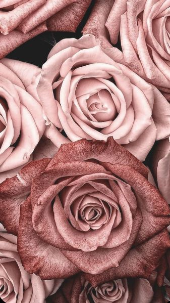 Fond D Ecran Fond D Ecran Rose Gold Fond D Ecran Colore Fond D Ecran Pastel Fond pastel aquarelle rose fleur pastel fond d ecran couleur font decran dessins mignons couleurs pastel fond decran iphone papier texture. pinterest