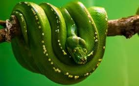 Resultado de imagen para reptiles