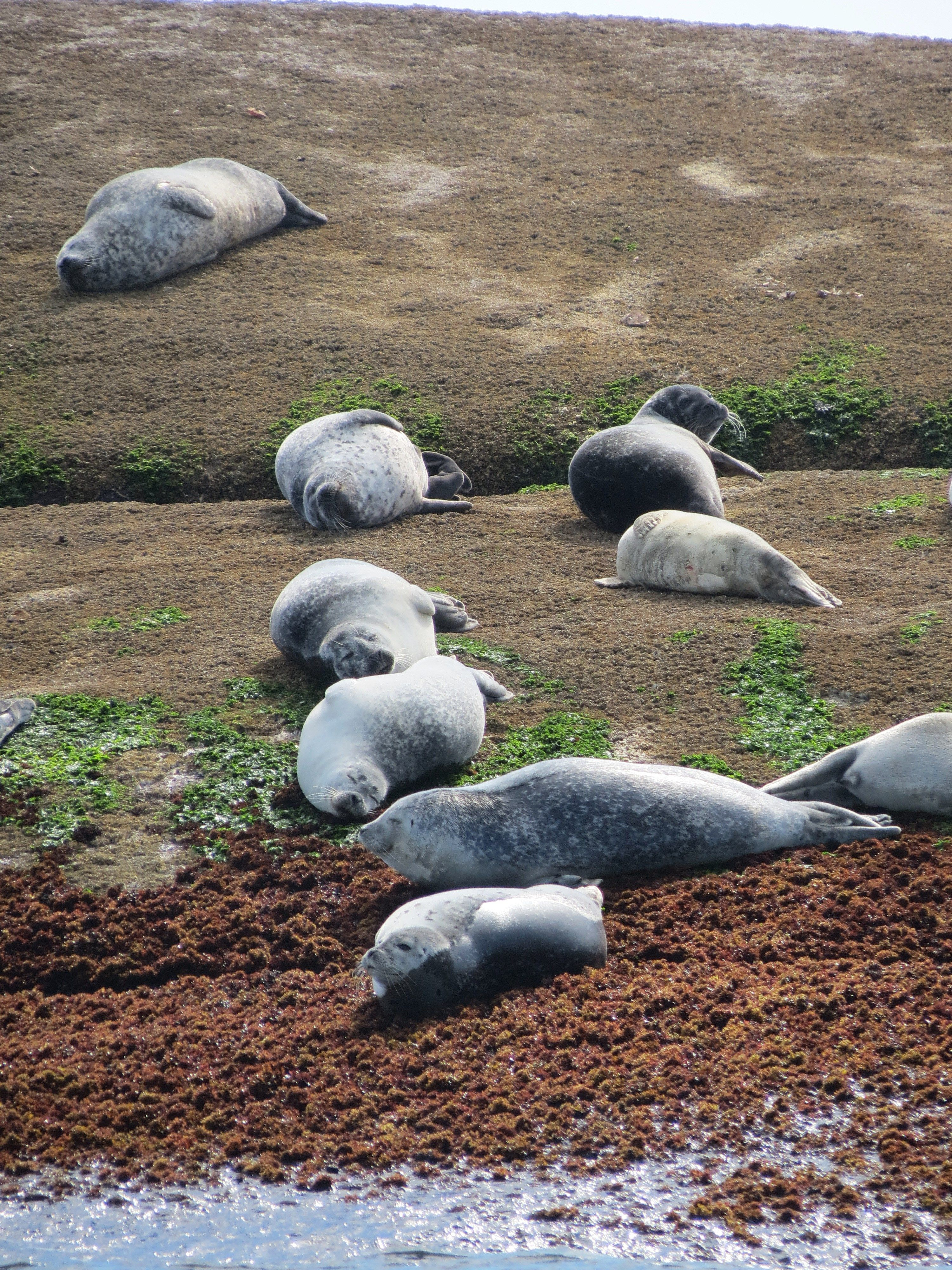 Oh to be a Seal ! Island off the Coast of #Maine
